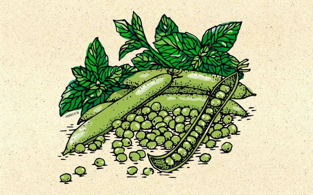 Illustrations culinaires pour la rubrique alimentaire du Quotidien Jurassien