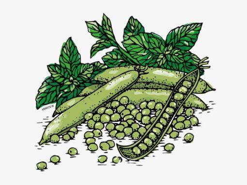 Illustrations culinaires pour Le Quotidien Jurassien